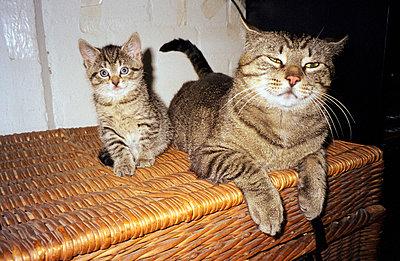 Katzenmama - p1650193 von Andrea Schoenrock