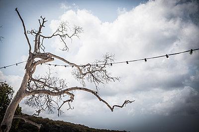 Kahler Baum mit Lichterkette - p045m1574505 von Jasmin Sander