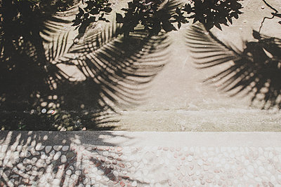 Silhouettes of palm leaves - p1345m2055628 by Alexandra Kern