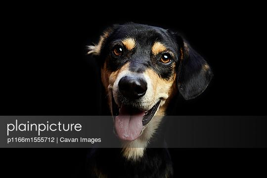 p1166m1555712 von Cavan Images