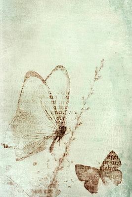 Schmetterlinge - p4500666 von Hanka Steidle