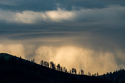 Silhouettes of trees under overcast sky in Bellevue, Idaho, USA - p1427m2136104 by Steve Smith