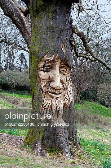 Carved bearded face on an old tree - p1562m2285186 by chinch gryniewicz
