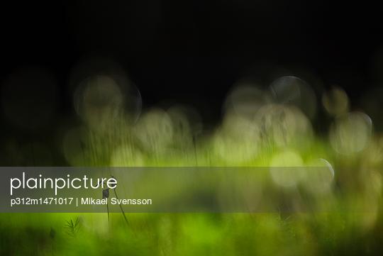 p312m1471017 von Mikael Svensson