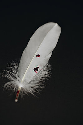 Feather and blood - p1623m2223289 by Donatella Loi