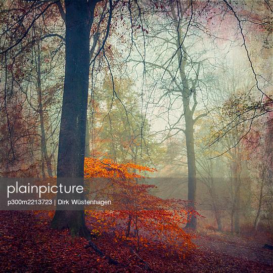 Forest in autumn, alienation - p300m2213723 by Dirk Wüstenhagen