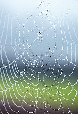 Droplets on cobweb - p312m1063337f by Sara Danielsson