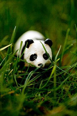 Bear hiding in the grass - p4451369 by Marie Docher