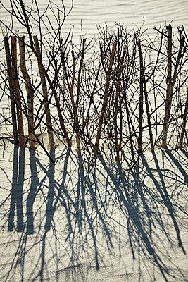 Windschutz - p706m858423 von Markus Tollhopf