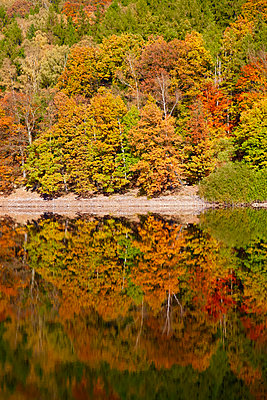 Germany, autumn forest, water reflection - p300m2060844 by Thomas Jäger