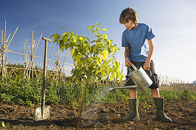 Pre-adolescent boy planting tree - p4296509f by Steve Sparrow