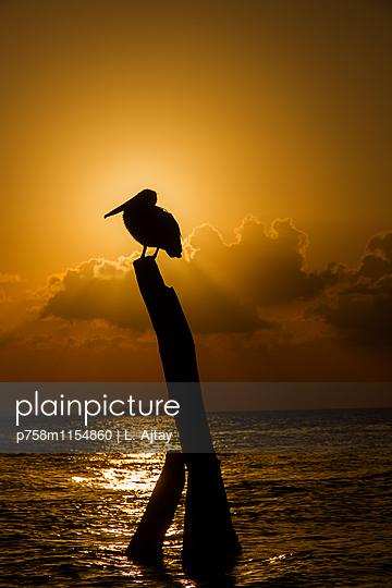 Pelikan auf einem Holzpfosten bei Sonnenuntergang - p758m1154860 von L. Ajtay