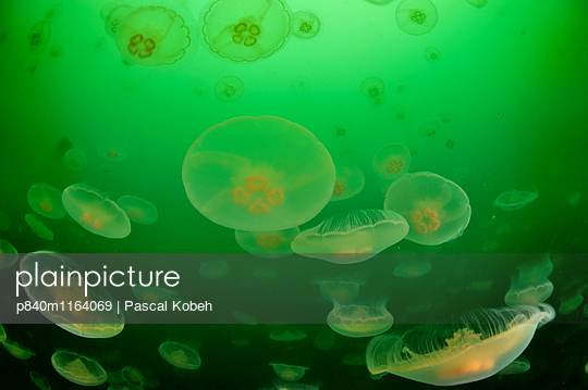 p840m1164069 von Pascal Kobeh