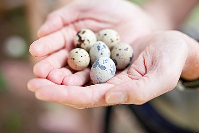 Person holding quail eggs in hands - p699m1525696 by Sonja Speck