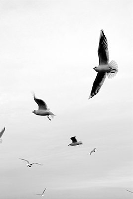 Seagull - p5970043 by Tim Robinson