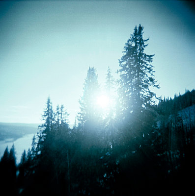 Evergreen Trees on Slope of Mountain with Sun Flare Filtering Through Branches - p6942584 by Mattias Lindbäck