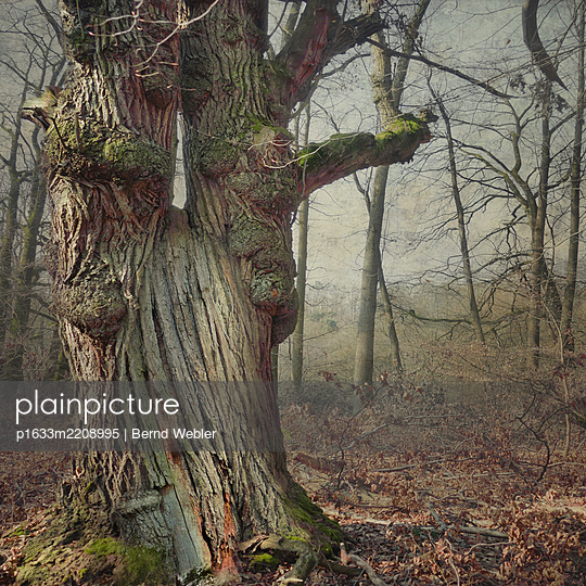 Songs from the Wood - p1633m2208995 by Bernd Webler
