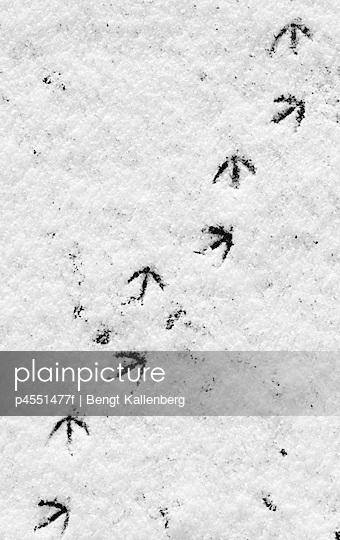 p4551477f von Bengt Kallenberg