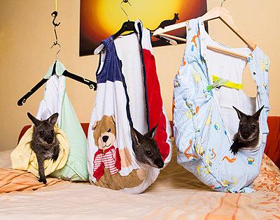 Drei Känguru Babys in ihren Schlafsäcken - p1221m1193478 von Frank Lothar Lange
