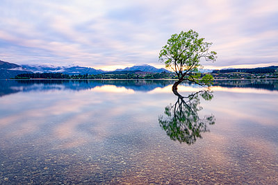 Lone Tree of Lake Wanaka against sky during sunset at South Island, New Zealand - p300m2144350 by Scott Masterton