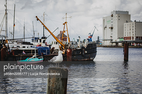Seagull at the harbour - p858m2295177 by Lucja Romanowska