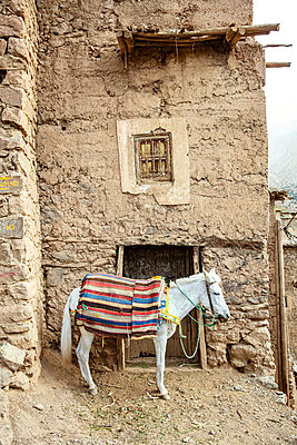 Mule In Berber Village - p1272m2142526 by Steffen Scheyhing