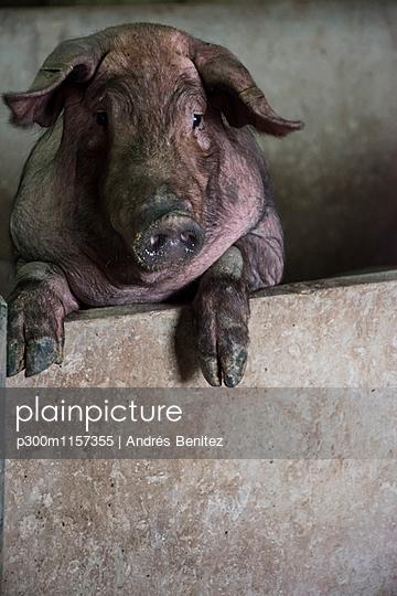 p300m1157355 von Andrés Benitez