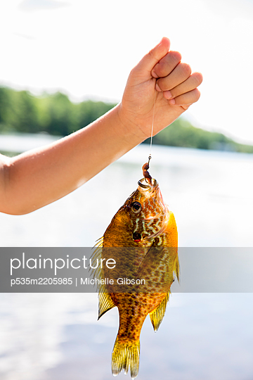 Fish - p535m2205985 by Michelle Gibson