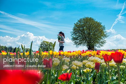 Tulpenblüte - p880m1159892 von Claudia Below