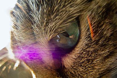 Katze, close-up - p1418m1571791 von Jan Håkan Dahlström