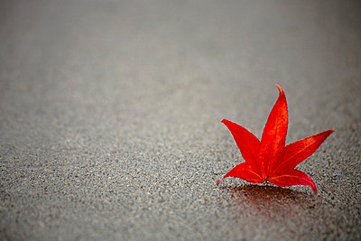 Red Leaf On Concrete - p44211062f by Hanson Ng