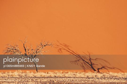 Namib - p1065m885969 von KNSY Bande