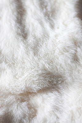 White fur - p8420107 by Renée Del Missier