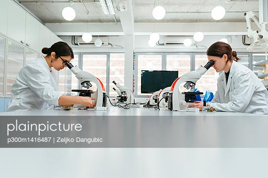 Laboratory technicians using microscopes in lab - p300m1416487 by Zeljko Dangubic