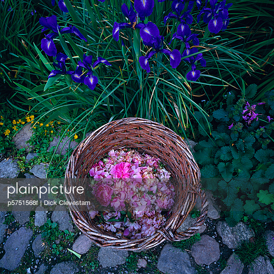 Petals in a basket - p5751568f by Dick Clevestam