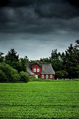 Rotes Reetdachhaus - p248m1462461 von BY