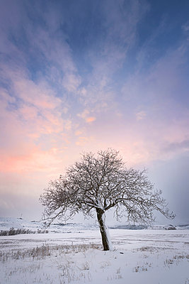 Spain, sunset in winter landscape with single bare tree - p300m1535777 by David Herraez Calzada