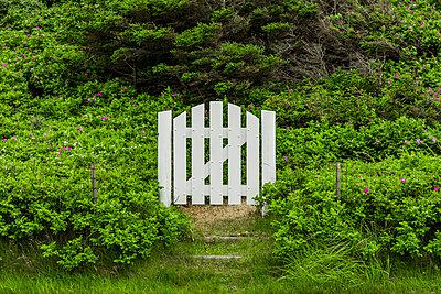 Weissse Gartentür in Rosenbüschen - p248m2107575 von BY