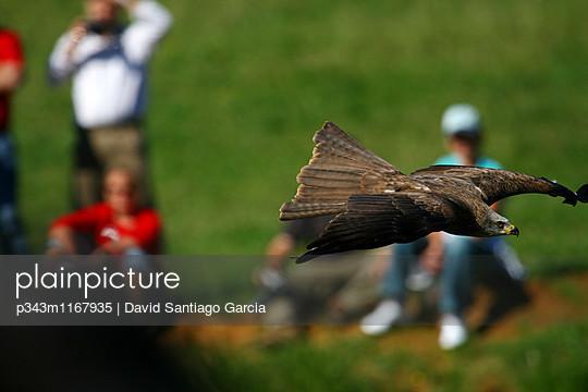 p343m1167935 von David Santiago Garcia