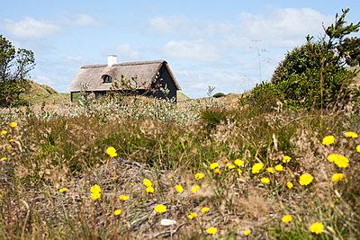 Ferienhaus in Dänemark - p1078m1050890 von Frauke Thielking
