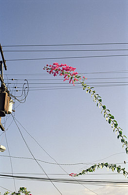 High-tension lines - p627m1035720 by Anja Schaffner