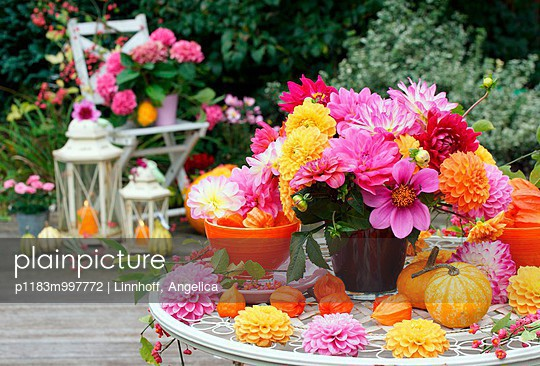 Autumnal patio decoration with asters, dahlias, ornamental squash and lanterns - p1183m997772 by Linnhoff, Angelica