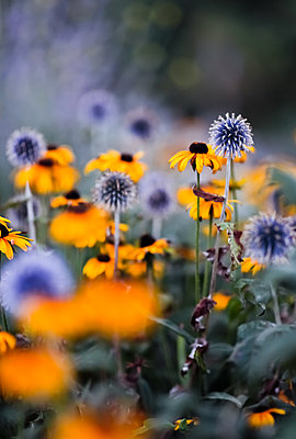 Blumen - p916m1492859 von the Glint