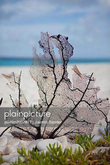Koralle vorm Meer - p045m2007877 von Jasmin Sander