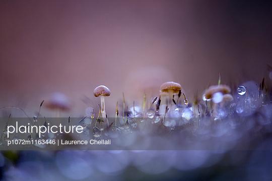 p1072m1163446 von Laurence Chellali