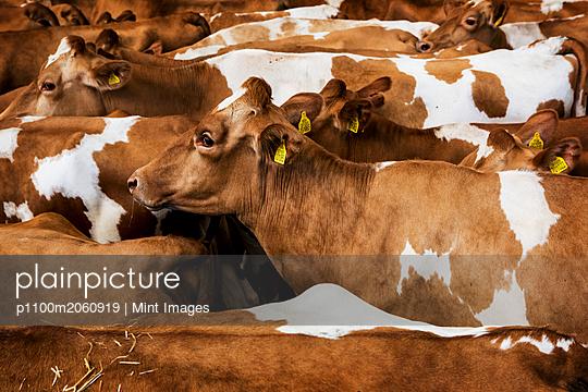 p1100m2060919 von Mint Images
