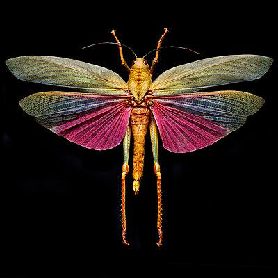 Grasshopper - p587m1104315 by Spitta + Hellwig