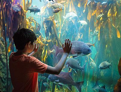 Junge in einem Ozeanium - p1082m2071313 von Daniel Allan