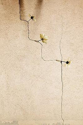 Riss in der Wand - p415m1586120 von Tanja Luther