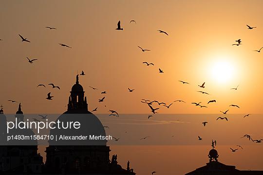 Vogelschwarm bei Sonnenuntergang hinter der Salute-Kirche, Venedig - p1493m1584710 von Alexander Mertsch